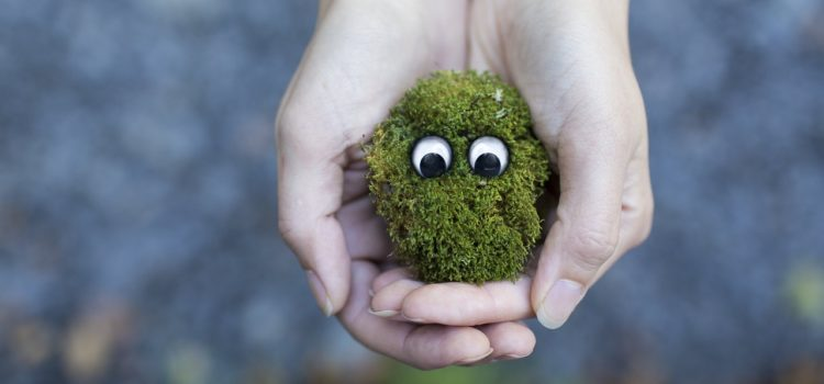 7 Ways To Help The Environment