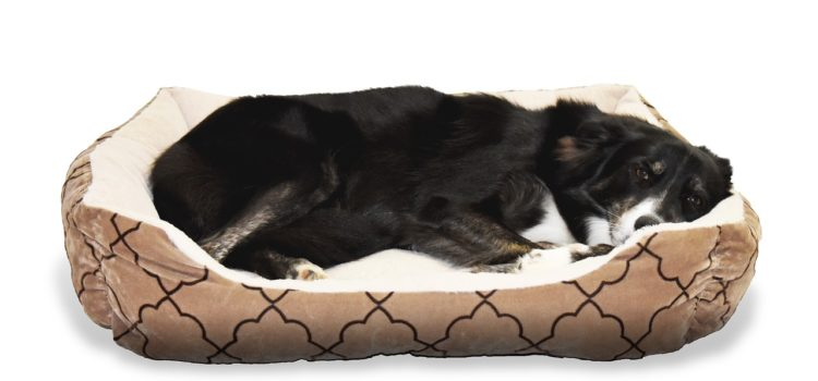 Green Dog Bed To Make Your Dog Comfortable And Protect The Environment